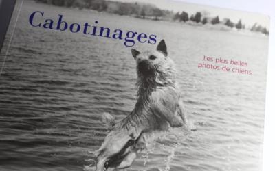 Cabotinages – les plus belles photos de chiens