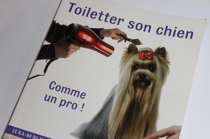 Toiletter son chien, comme un pro!