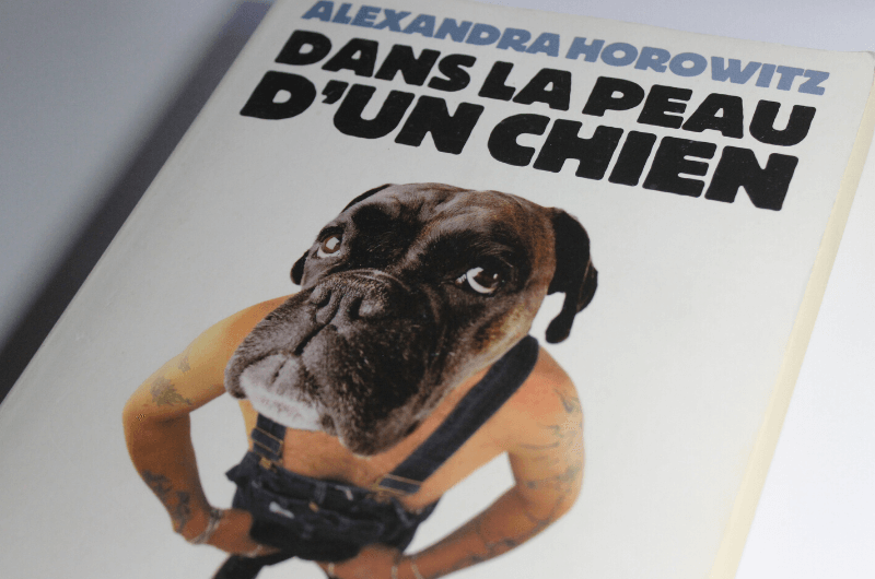 Dans la peau d'un chien